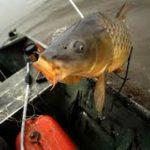 Umpan Ikan Mas Galatama Malam Hari