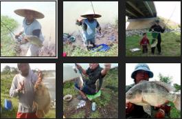 Umpan Jitu Ikan Nila Kolam Harian