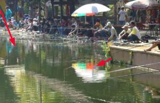 Umpan Ikan Mas Harian Air Hijau