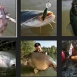Umpan Ikan Mas Air Hijau Berlumut