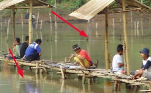 Umpan Ikan Mas Air Coklat Rajaumpan Com 2021