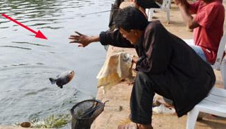 Trik Jitu Umpan Mancing Ikan Mas Lomba Kolam