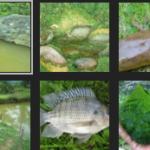 Cara Mancing Ikan Nila yang Susah Makan
