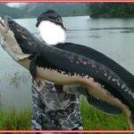 Cara Memancing Ikan Gabus Malam Hari