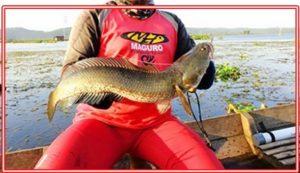 Mancing Ikan Gabus Rawa Tips dan Triknya