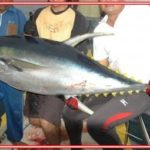 Mancing Tuna Laut Dalam Berikut Umpan dan Tekniknya