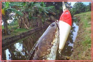 Umpan Ikan Gabus Tiruan Sederhana