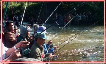 Umpan Ikan Mujair Babon Liar Berikut Trik dan Caranya
