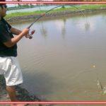 Umpan Mancing Ikan Mujair di Tambak Berikut Resep Paling Jos