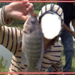 Umpan Jitu Ikan Mujair Besar di Segala Lokasi Mancing