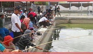 Umpan Ikan Tombro Majalaya Paling Galak