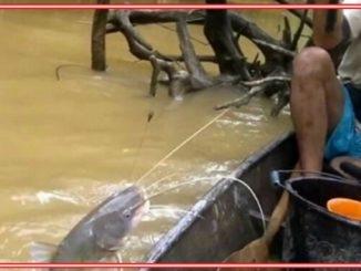 Teknik Mancing Ikan Baung di Sungai Dengan Umpan Racikan Sendiri