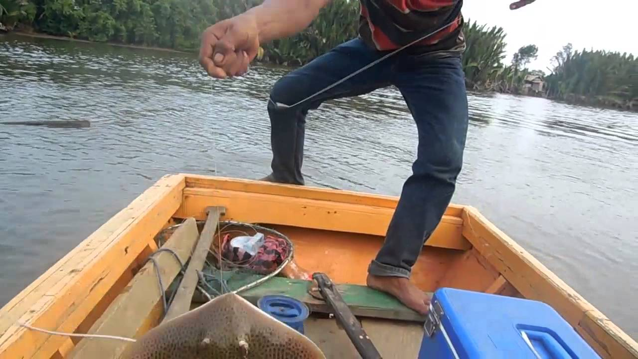 Cara Mancing Ikan Pari Terbukti Galak Jos