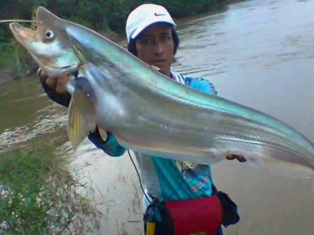 Cara Mancing Ikan Lais Di Sungai Gunakan Umpan Ini