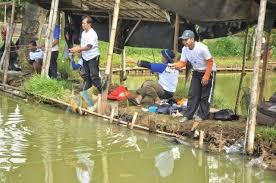 Umpan Mancing Ikan Lele di Kolam Harian