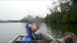 Umpan Mancing Ikan Patin Besar