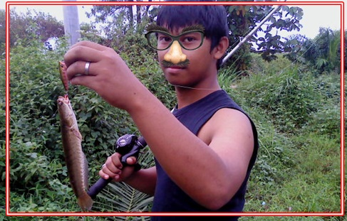Cara Mancing Ikan Toman dan Gabus Hasil Memuaskan