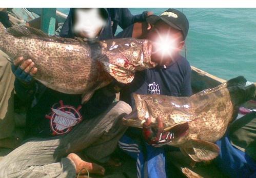 Cara Mancing Ikan Siakap Rahasia Kita Bongkar