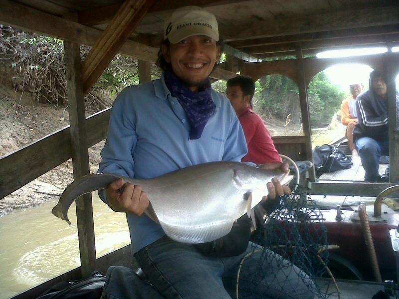 Cara Mancing Ikan Belida Umpan Dan Waktunya