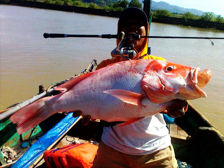 Cara Mancing Ikan Merah Siang Malam Hari